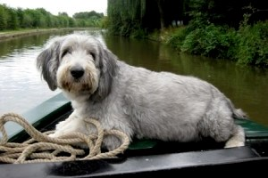 Dog on narrowboat