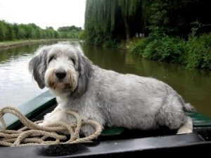 dogonnarrowboat